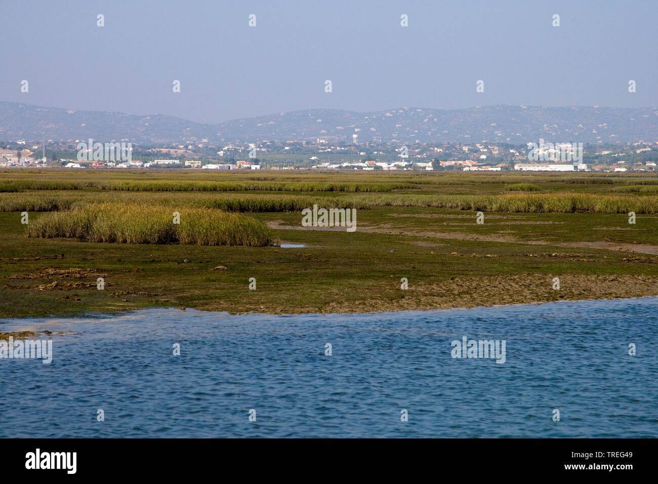 Ria Formosa Lagune, Portugal, Parque Natural da Ria Formosa   Ria Formosa lagoon, Portugal, Parque Natural da Ria Formosa   BLWS525785.jpg [ (c) blick - Stock Image