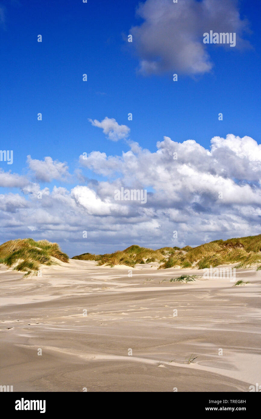 Duenen bei Vliehorst, Niederlande, Friesland, Vlieland | Dunes at de Vliehorst, Netherlands, Frisia, Vlieland | BLWS525901.jpg [ (c) blickwinkel/AGAMI - Stock Image