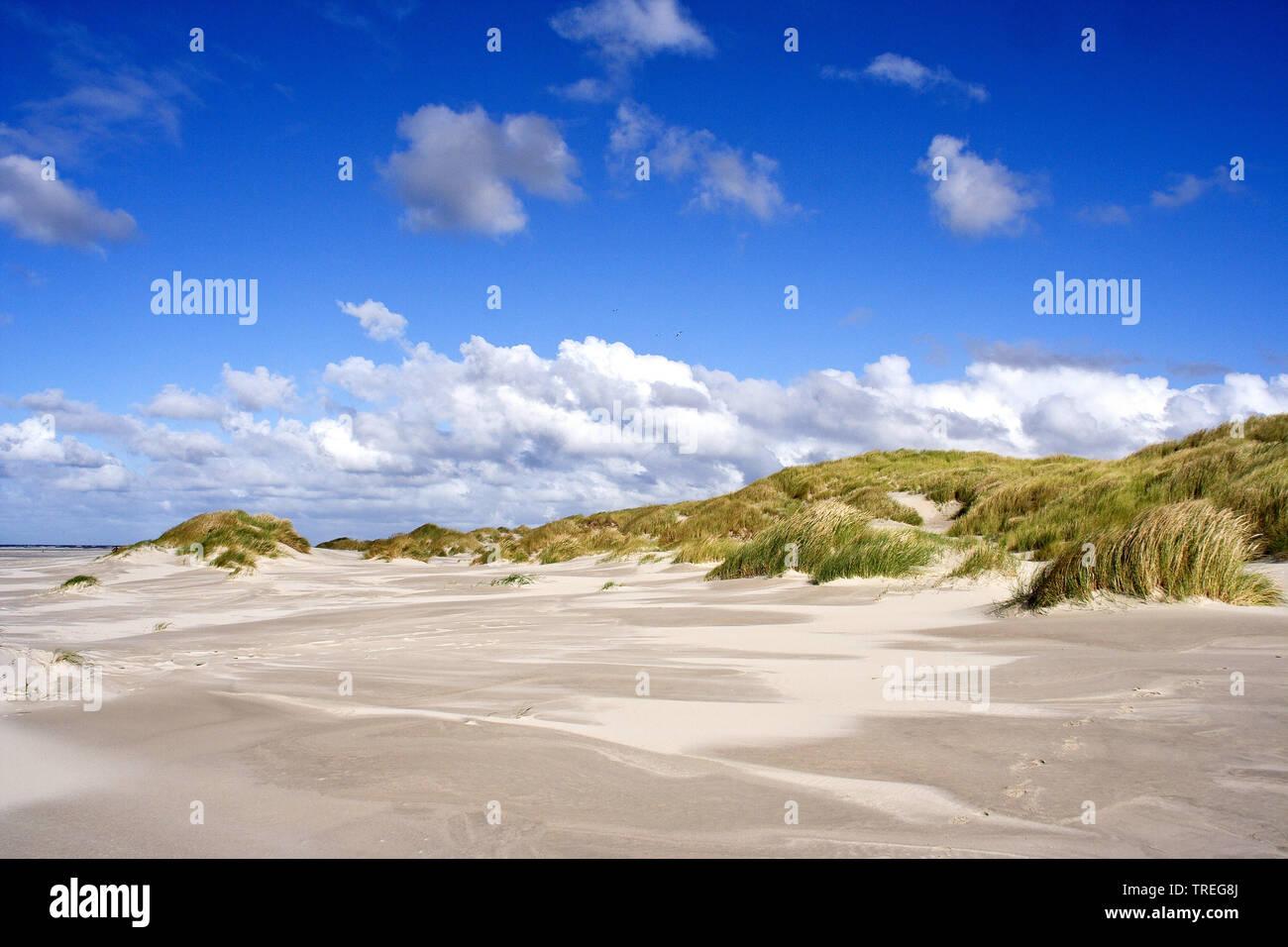 Duenen bei Vliehorst, Niederlande, Friesland, Vlieland | Dunes at de Vliehorst, Netherlands, Frisia, Vlieland | BLWS525900.jpg [ (c) blickwinkel/AGAMI - Stock Image