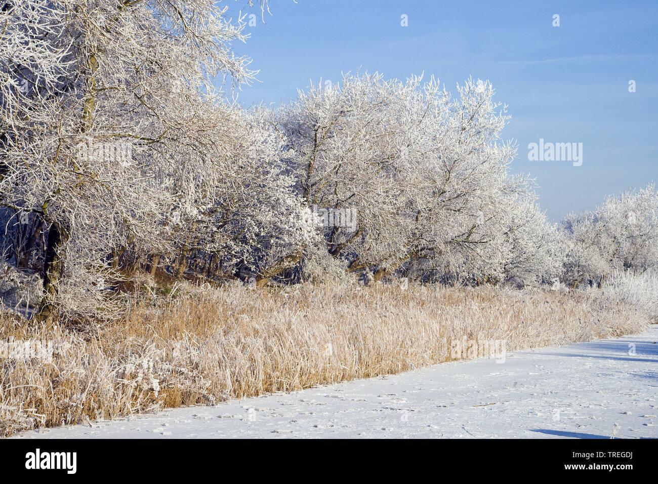 Baeume und Straeucher mit Raureif und zugefrorenes Gewaesser, Niederlande, Katwijk | hoarfrost on trees and shrubs and frozen stretch of water, Nether - Stock Image
