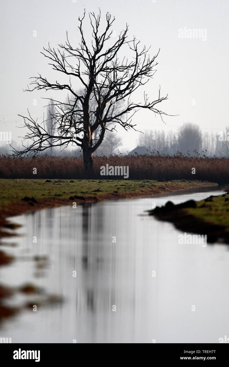 zugefrorender Wassergraben und abgestorbener Baum im Eempolder an einem Wintertag, Niederlande | Frozen ditch and silhouette of dead tree during a win - Stock Image