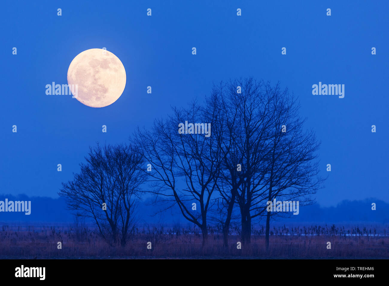 Vollmond ueber dem Duemmer See, Deutschland, Niedersachsen, Oldenburger Muensterland, Duemmerlohhausen   full moon over lake Duemmer, Germany, Lower S - Stock Image