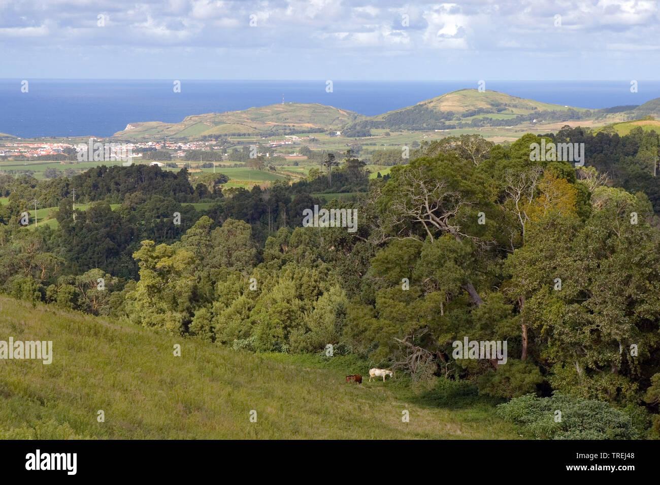 Sao Miguel, Azoren, Sao Miguel   Sao Miguel, Azores, Sao Miguel   BLWS527296.jpg [ (c) blickwinkel/AGAMI/D. Occhiato Tel. +49 (0)2302-2793220, E-mail: - Stock Image