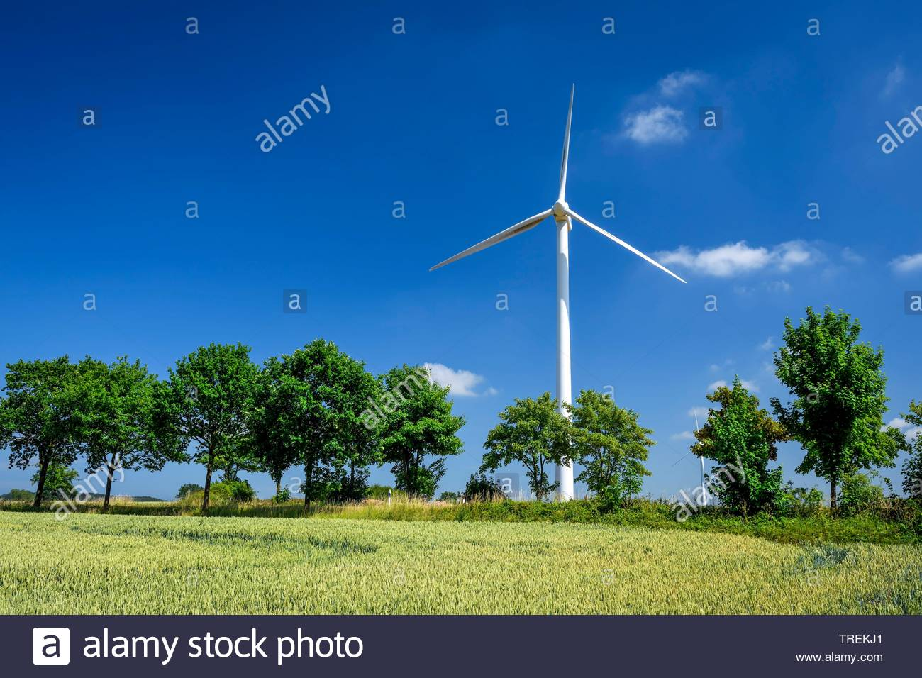 Windrad in einem Kornfeld in der Gemeinde Scharbeutz, Deutschland, Schleswig-Holstein | Wind wheel located in a cornfield near Scharbeutz, Germany, Sc - Stock Image