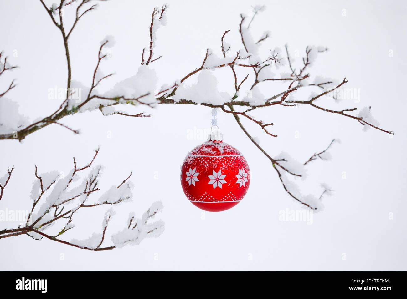 Weihnachtskugel an einem verschneiten Zweig, Schweiz   Christmas ball at a snow-covered twig, Switzerland   BLWS528481.jpg [ (c) blickwinkel/P. Frisch - Stock Image