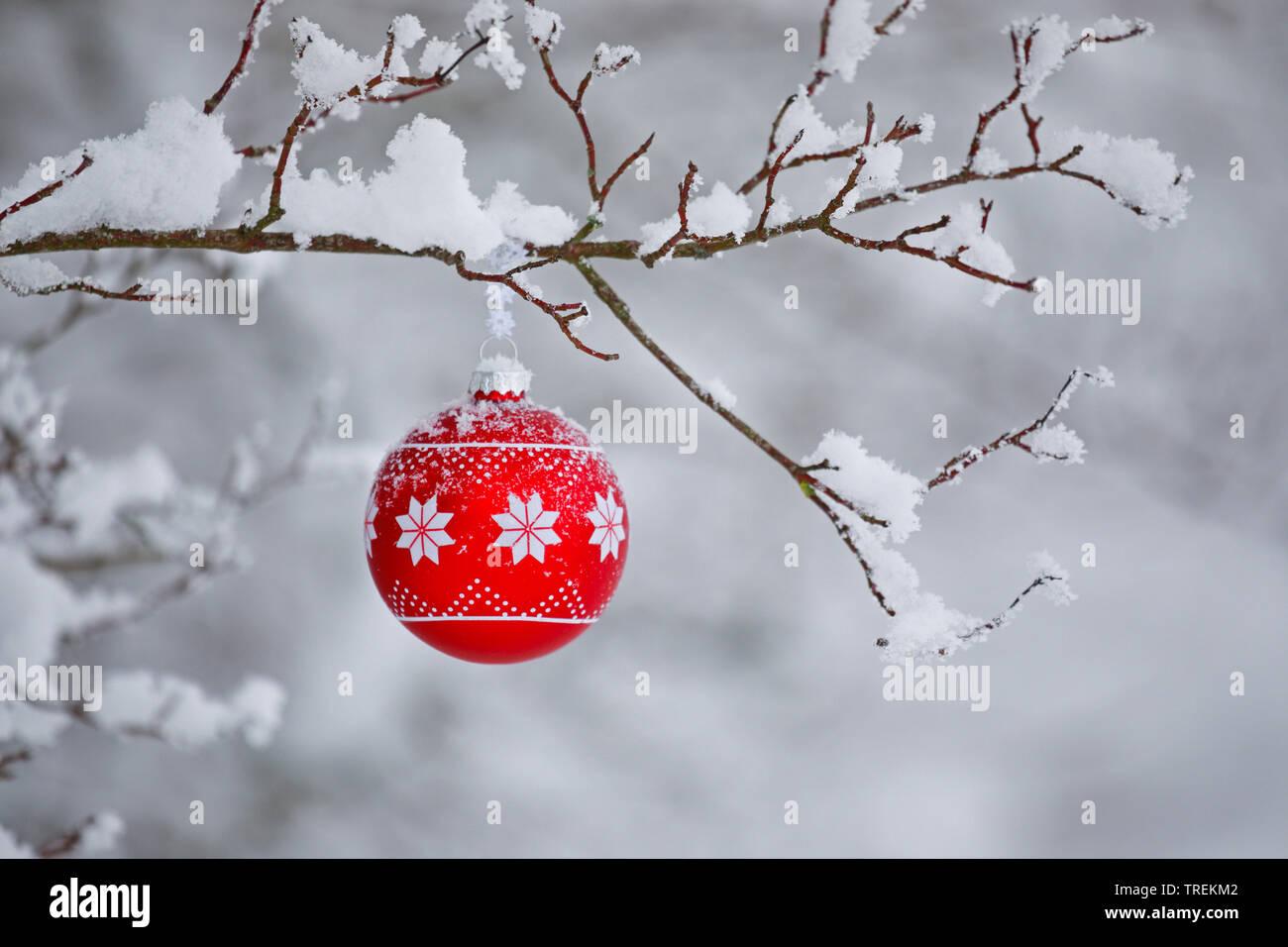 Weihnachtskugel an einem verschneiten Zweig, Schweiz   Christmas ball at a snow-covered twig, Switzerland   BLWS528482.jpg [ (c) blickwinkel/P. Frisch - Stock Image