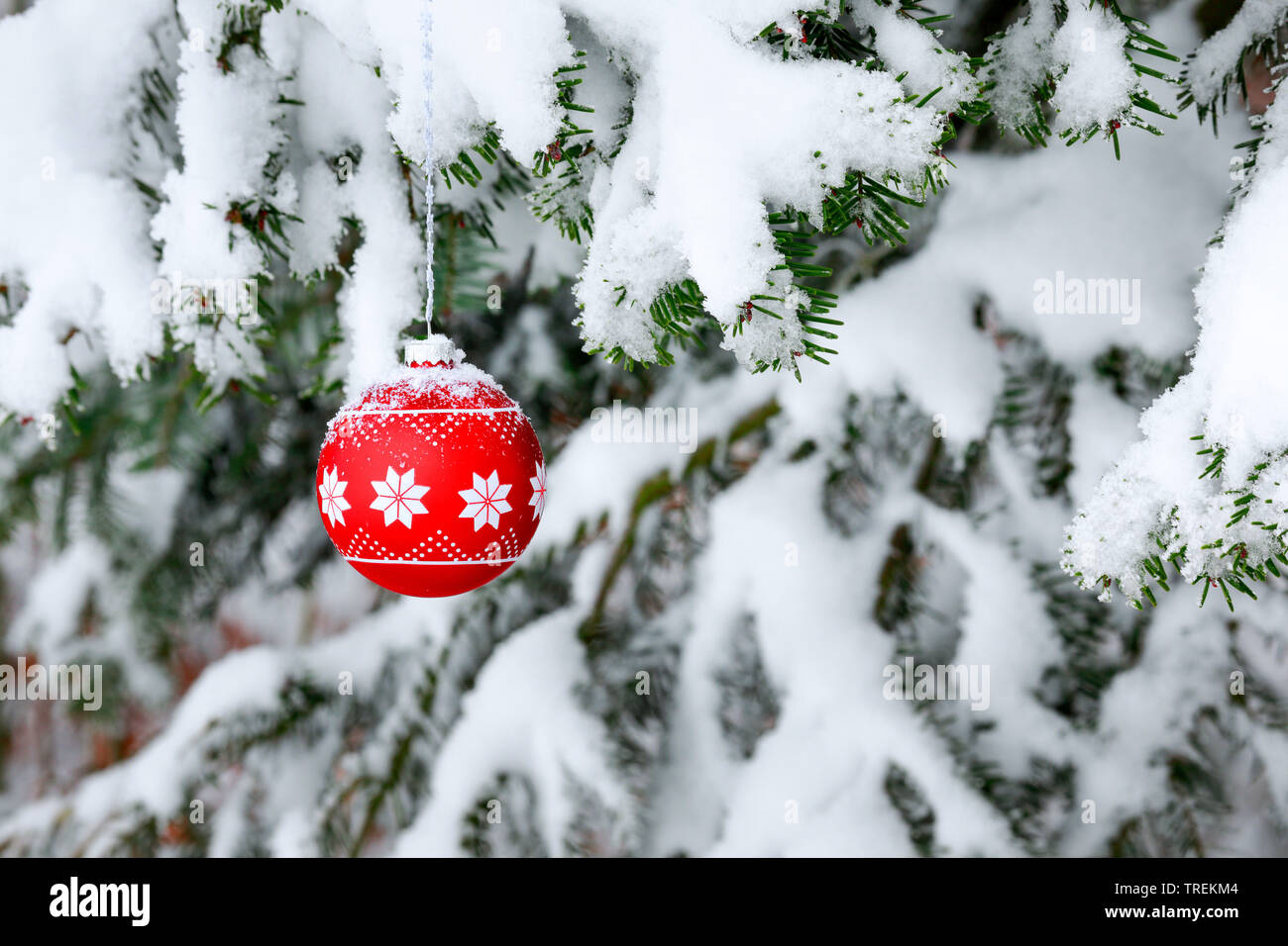 Weihnachtskugel an einem verschneiten Fichtenzweig, Schweiz   Christmas ball at a snow-covered spruce twig, Switzerland   BLWS528486.jpg [ (c) blickwi - Stock Image