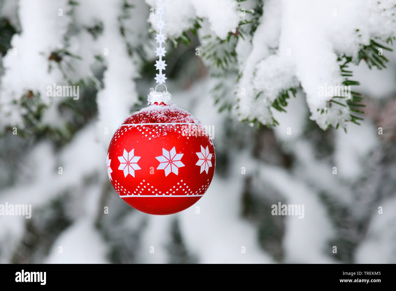 Weihnachtskugel an einem verschneiten Fichtenzweig, Schweiz   Christmas ball at a snow-covered spruce twig, Switzerland   BLWS528484.jpg [ (c) blickwi - Stock Image