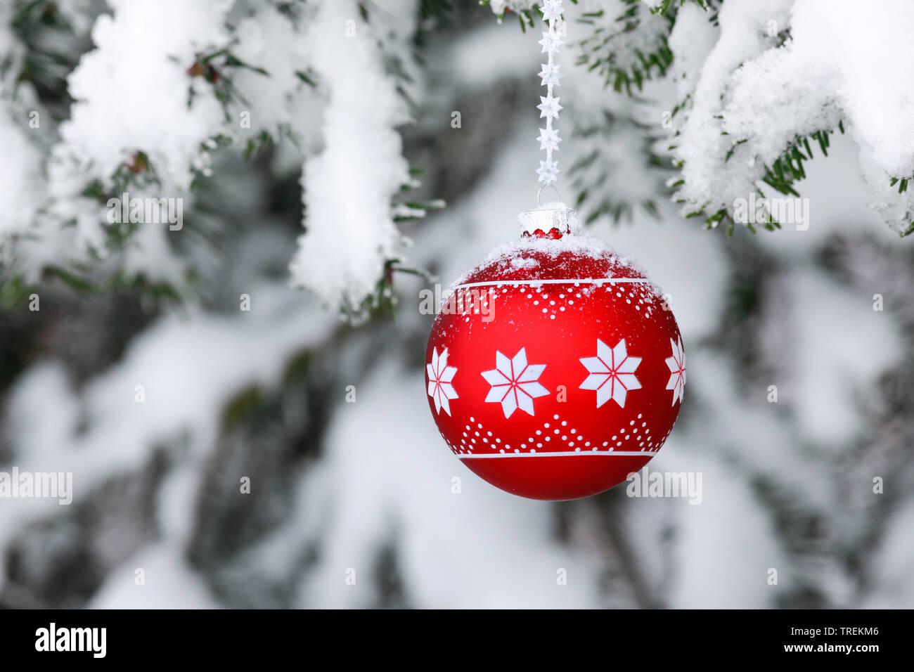 Weihnachtskugel an einem verschneiten Fichtenzweig, Schweiz   Christmas ball at a snow-covered spruce twig, Switzerland   BLWS528487.jpg [ (c) blickwi - Stock Image