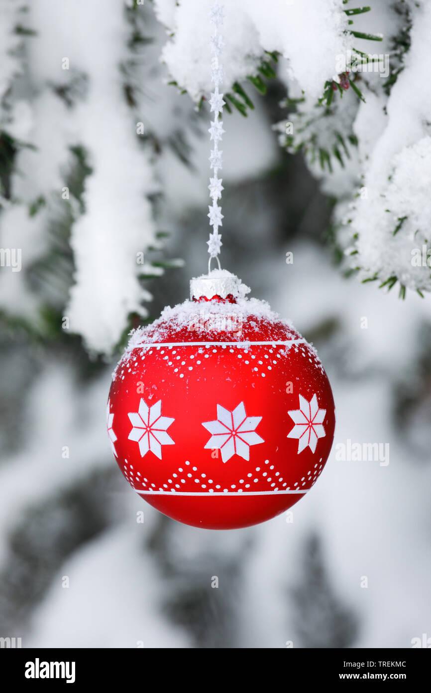 Weihnachtskugel an einem verschneiten Fichtenzweig, Schweiz   Christmas ball at a snow-covered spruce twig, Switzerland   BLWS528485.jpg [ (c) blickwi - Stock Image