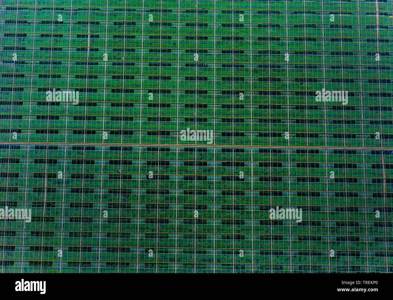 Gewaechshaus von oben, Luftbild, Deutschland, Schleswig-Holstein, Nordfriesland | greenhouse, aerial picture, Germany, Schleswig-Holstein, Northern Fr - Stock Image