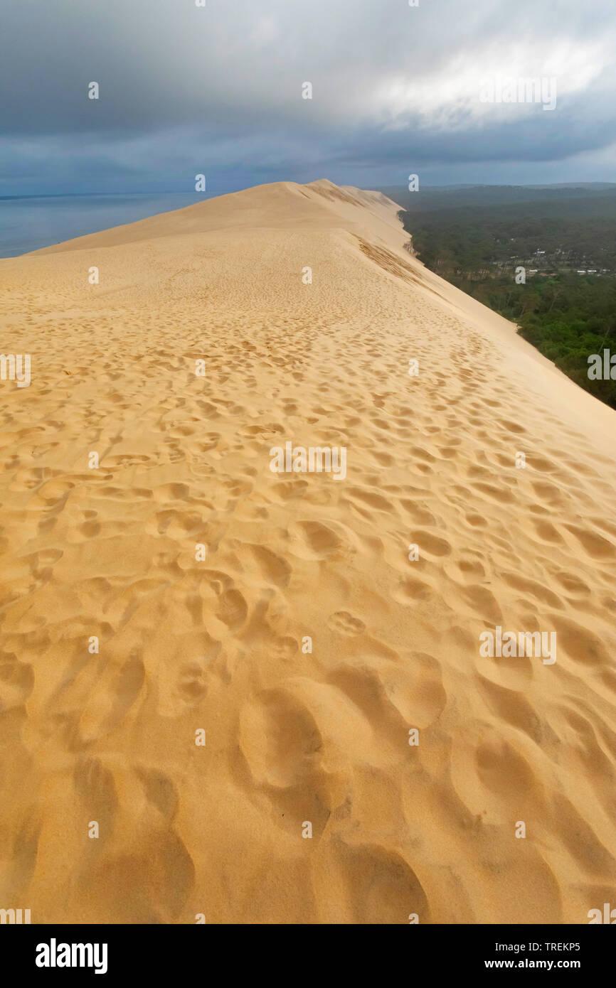 Dune du Pilat, groesste Wanderduene Europas, Frankreich, Arcachon    , Dune of Pilat, tallest sand dune in Europe, France, Arcachon   BLWS528659.jpg [ - Stock Image