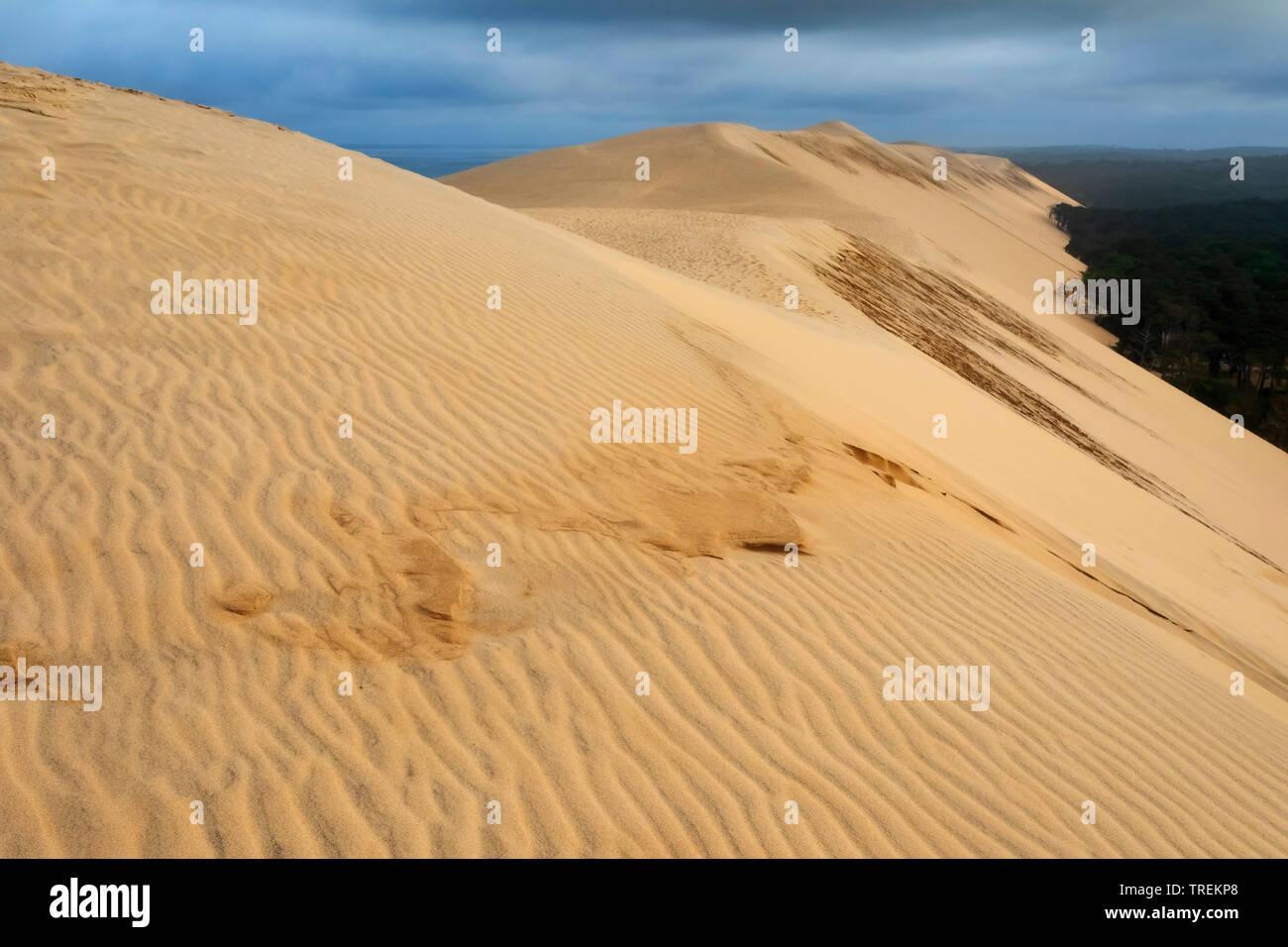 Dune du Pilat, groesste Wanderduene Europas, Frankreich, Arcachon    , Dune of Pilat, tallest sand dune in Europe, France, Arcachon   BLWS528661.jpg [ - Stock Image