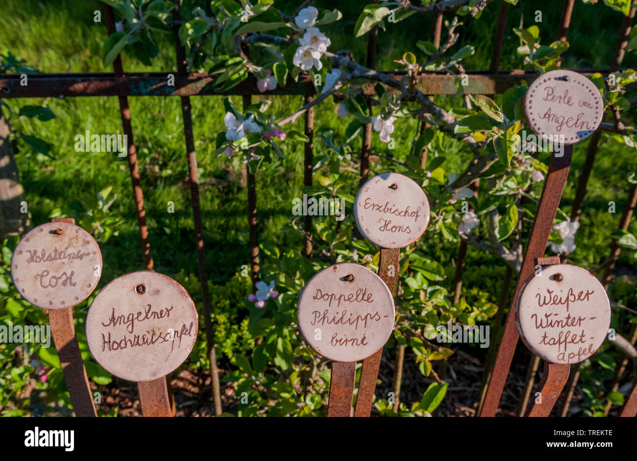 labels of old fruit tree cultivars, Germany Stock Photo