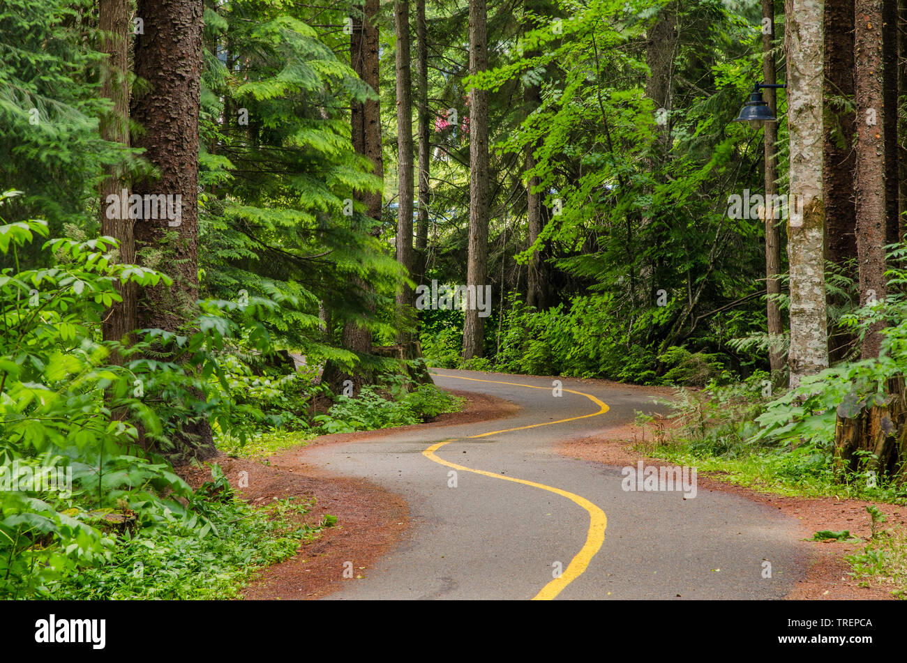 Empty Winding two-lane path for pedestrains and cyclists through woods Stock Photo