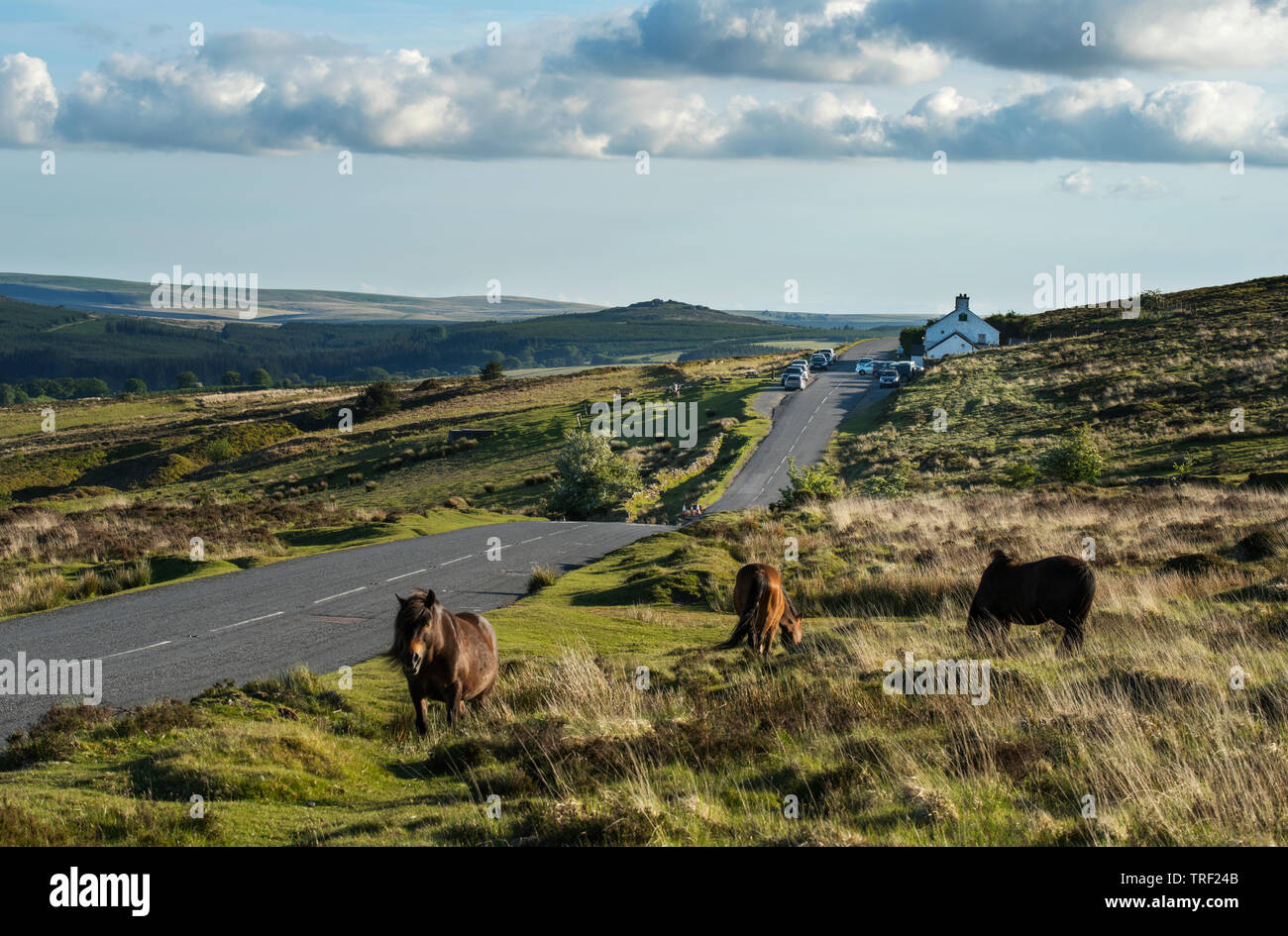 Warren House Inn and Dartmoor Hill Ponies on Dartmoor Devon England UK May 2019 The Warren House Inn is a remote and isolated public house in the hear - Stock Image