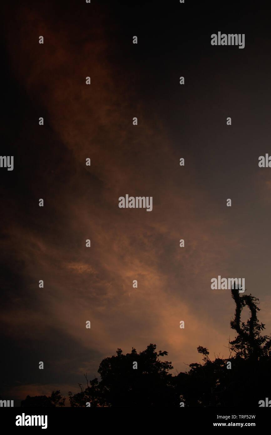 Dawn - Stock Image