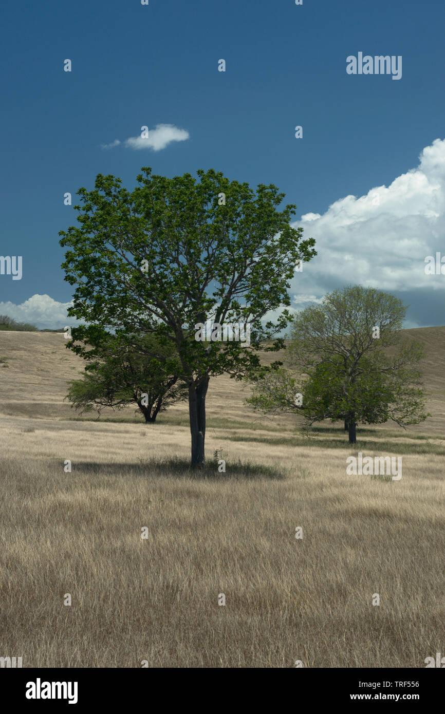 Trees in Cabo Rojo - Stock Image