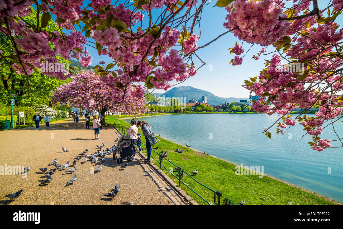 Bergen city park in full bloom - Stock Image