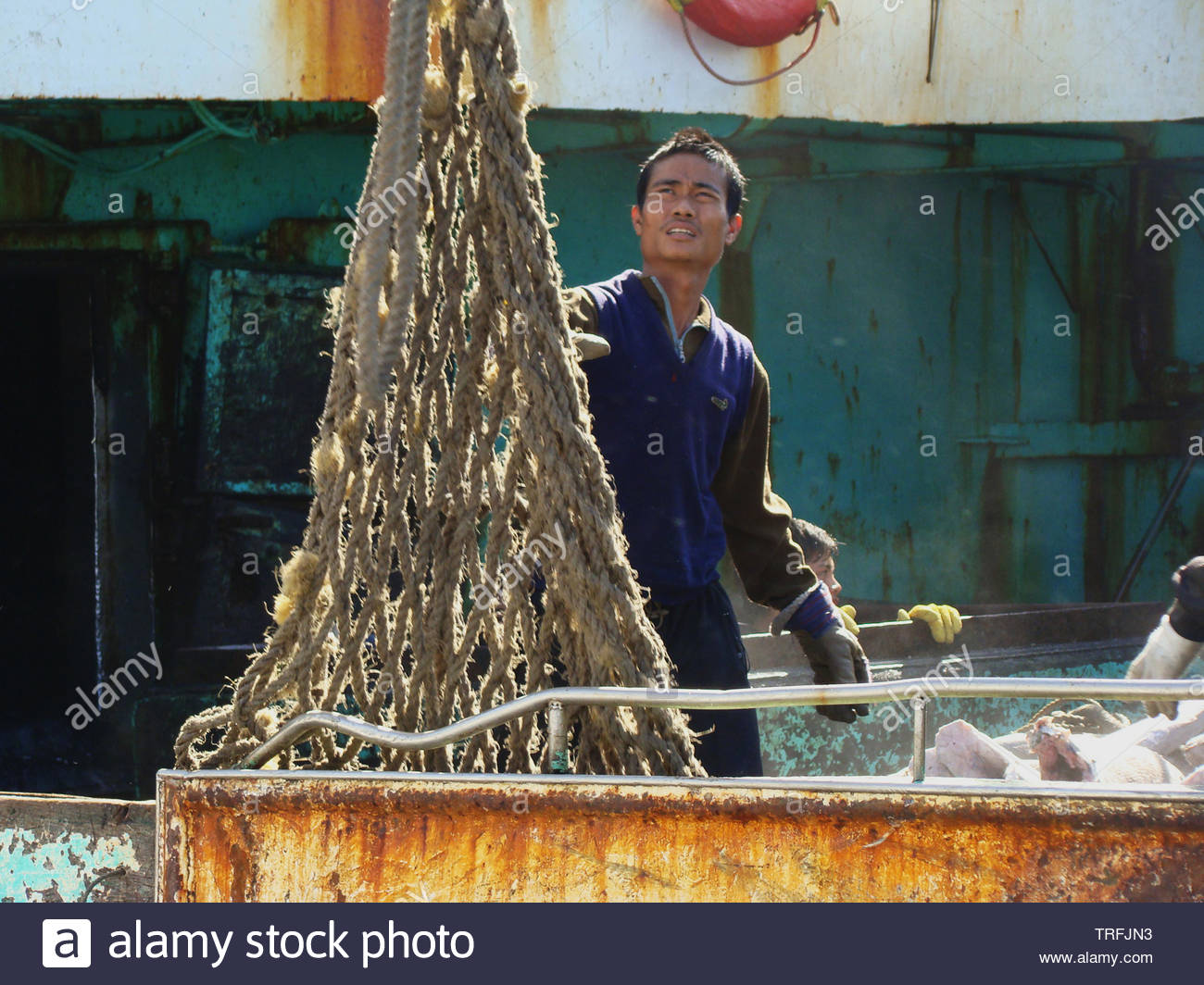 The crew of an Asian longliner prepares the last batches of frozen fish to be transshipped onto the Taiwanese-flagged mothership moored by her side. - Stock Image