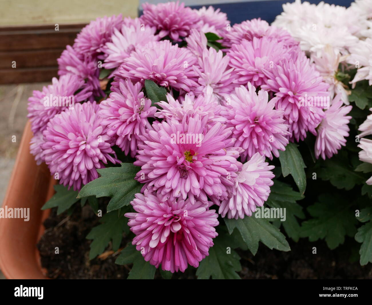 Blumen Pflanzen Grün Garten Topf - Stock Image