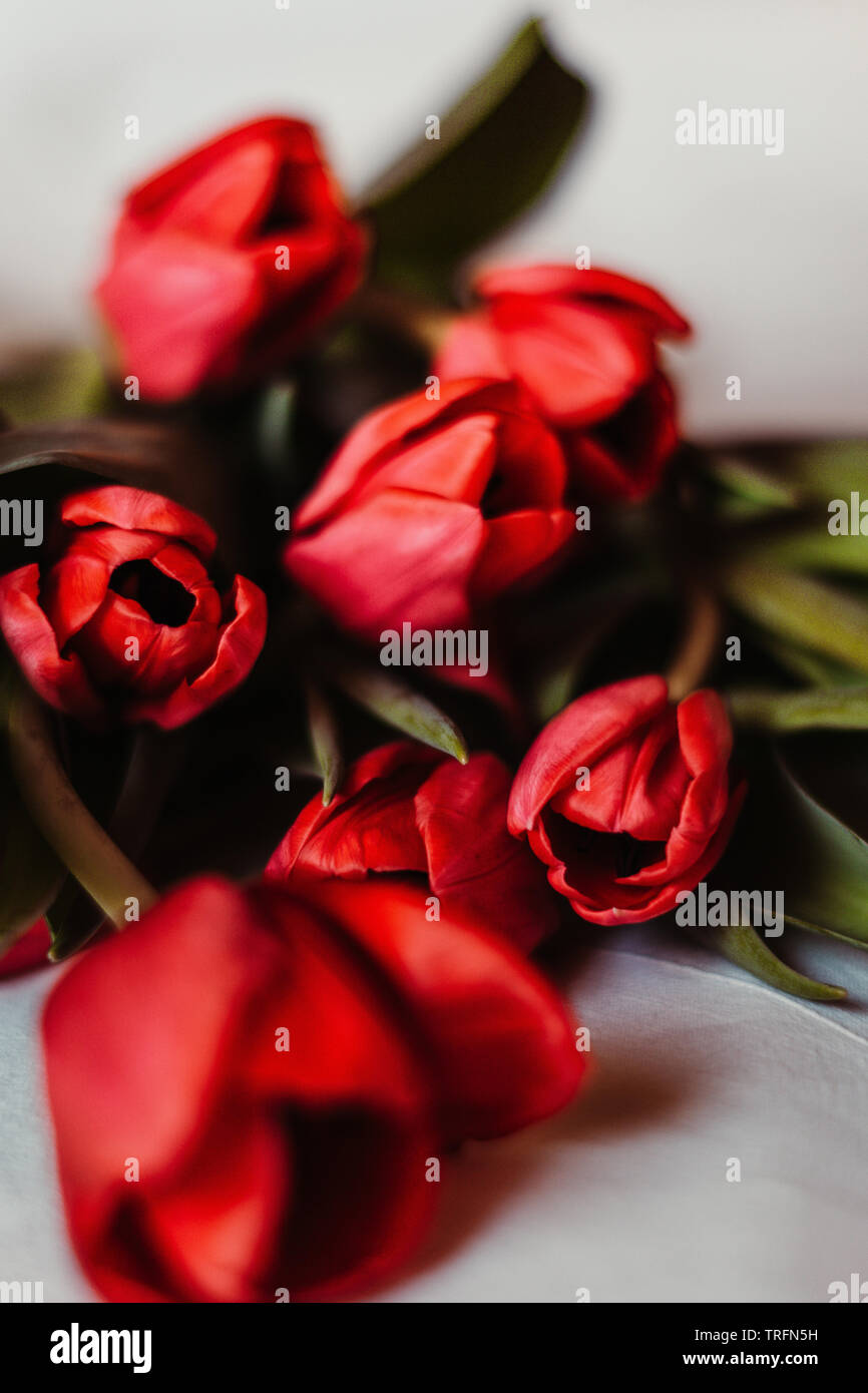 stunning alluring red flower bouquet - Stock Image