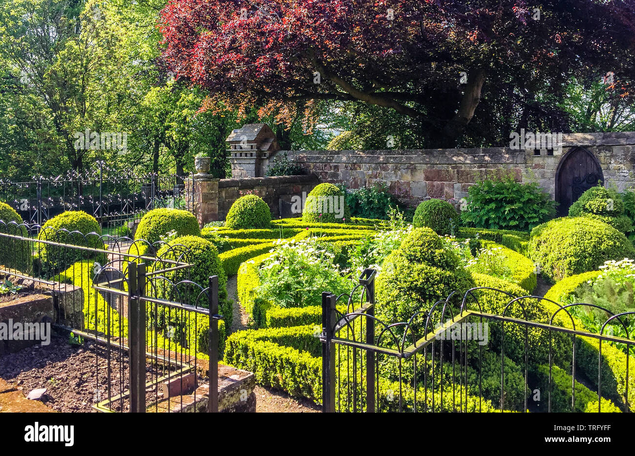 Parterre garden of clipped box within the walled garden of Norbury Manor near Ashbourne in Derbyshire UK Stock Photo