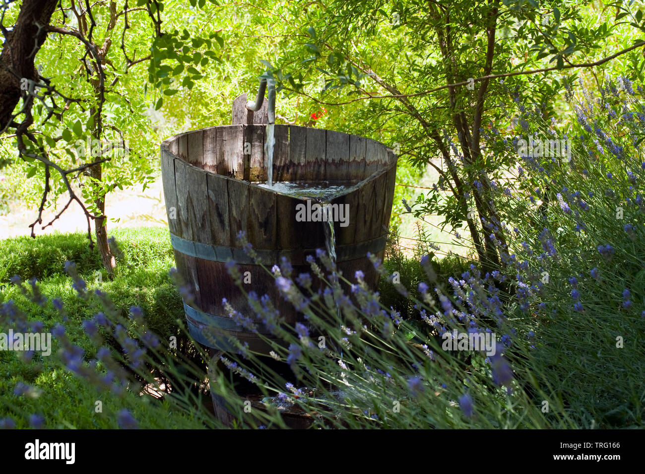 Garten im Libanon - Stock Image