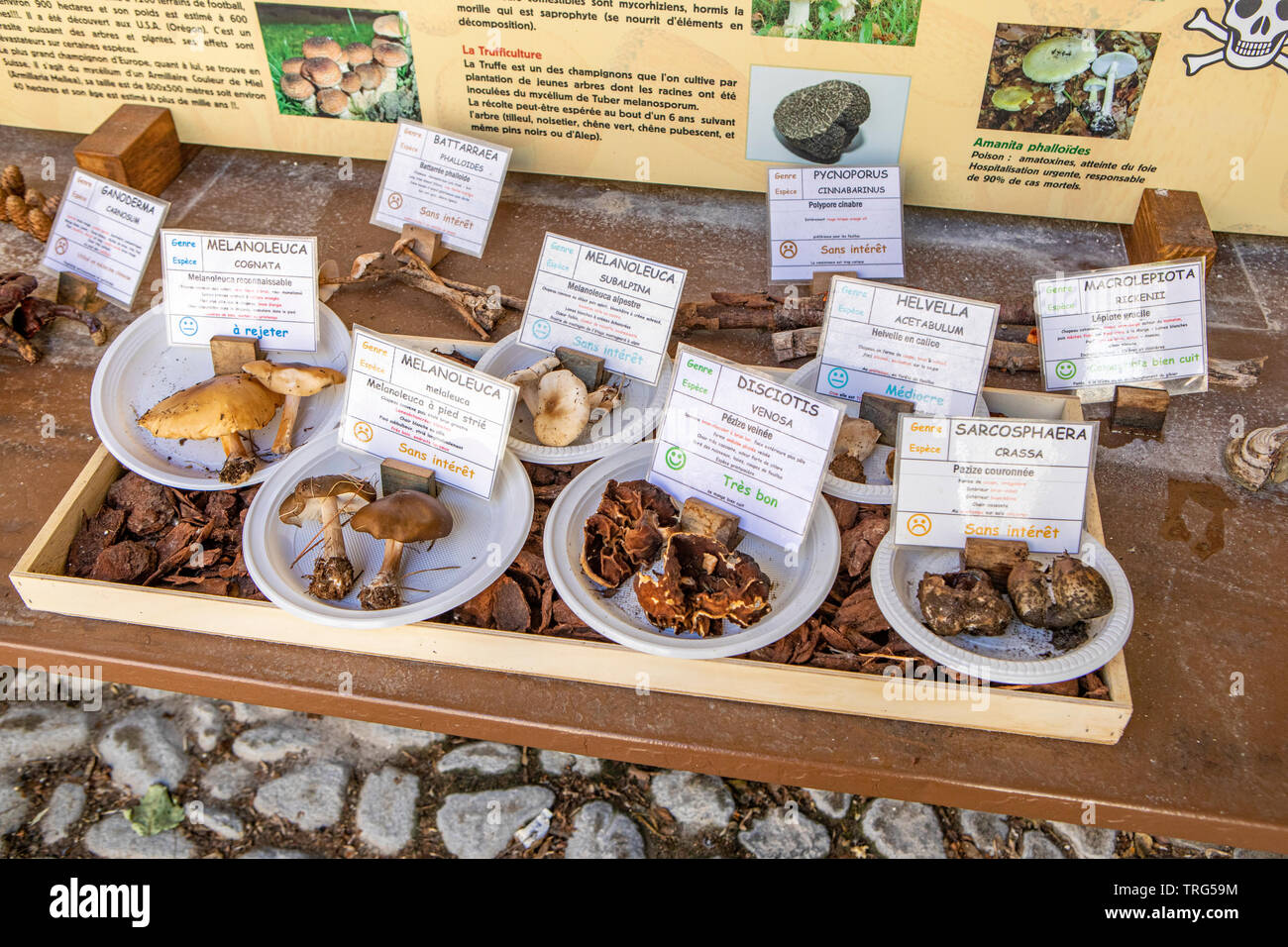 Mushrooms of the South of France - Stock Image