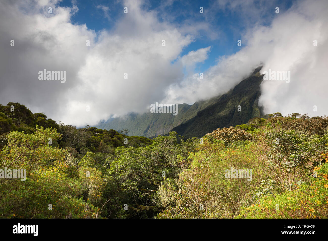 The Col de Boeuf, Réunion Island, France Stock Photo