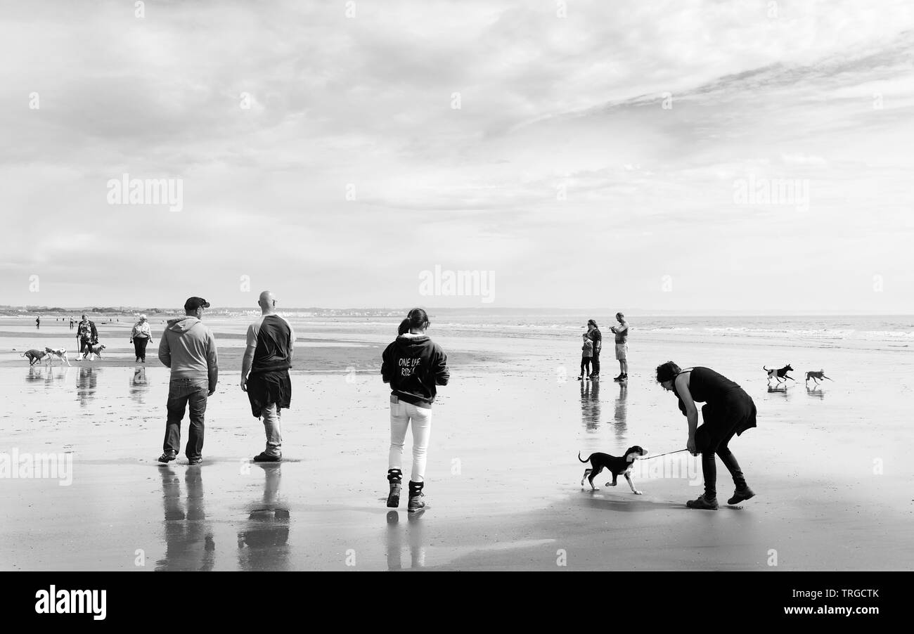 Qwners play with their dogs during Whippet Walk annual event on sunny beach, Fraisthorpe, Yorkshire, UK. - Stock Image