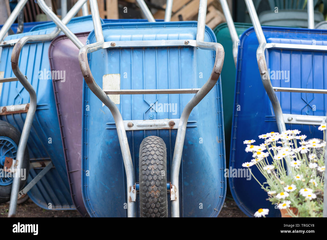 Blue wheel barrows, stored ready for use, - Stock Image