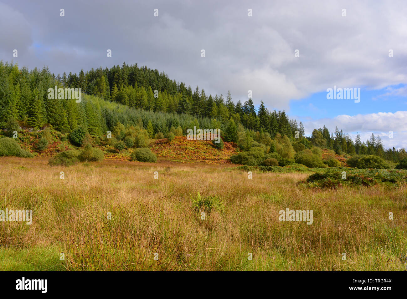 Autumn landscape at Duke's Pass, between Aberfoyle and Loch Katrine in The Trossachs, Scotland - Stock Image