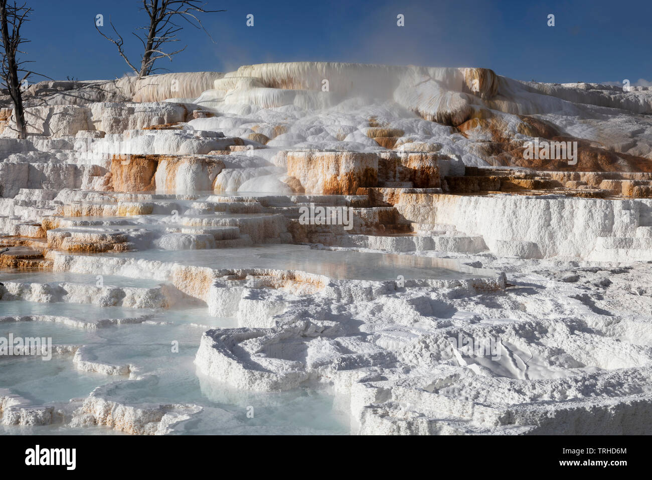 Thermal features, Mammoth Hot Springs, Yellowstone National Park, Montana, USA, by James D Coppinger/Dembinsky Photo Assoc - Stock Image