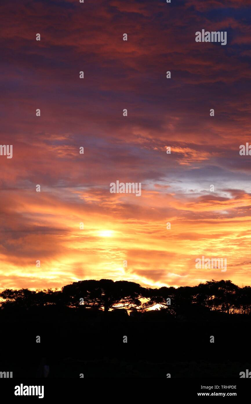 beautiful and colorfull sunset with trees shadows - Stock Image