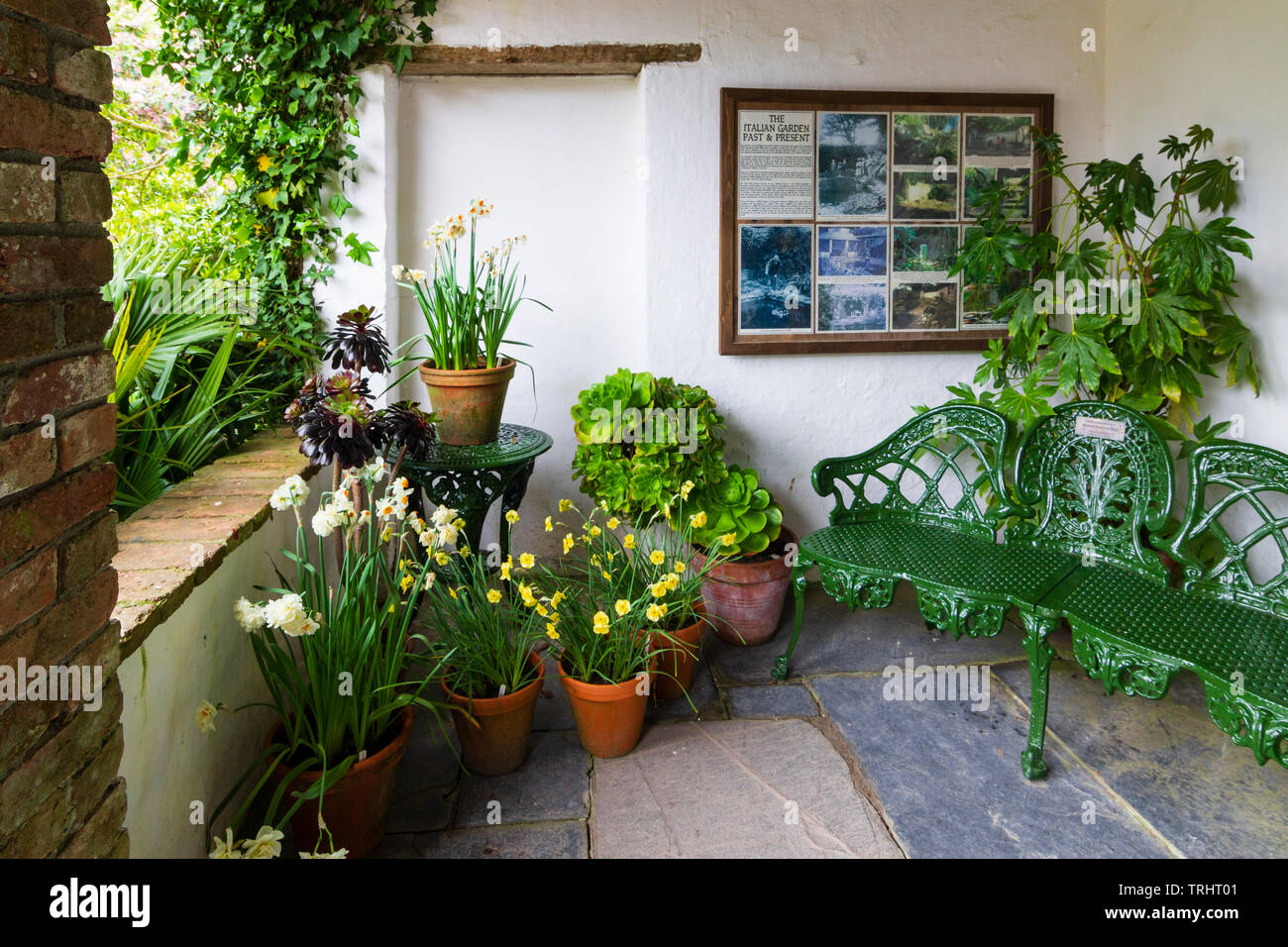 Spring bulbs and a cast iron green bench decorate the covered sitting area in the Italian Garden at Heligan, Cornwall, UK - Stock Image