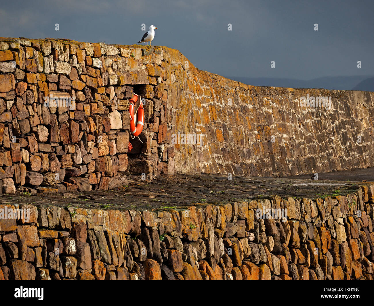 golden stones of the old harbour wall contrast with recessed orange lifebelt in evening light with gull at Cellardyke, Anstruther, Fife, Scotland, UK - Stock Image
