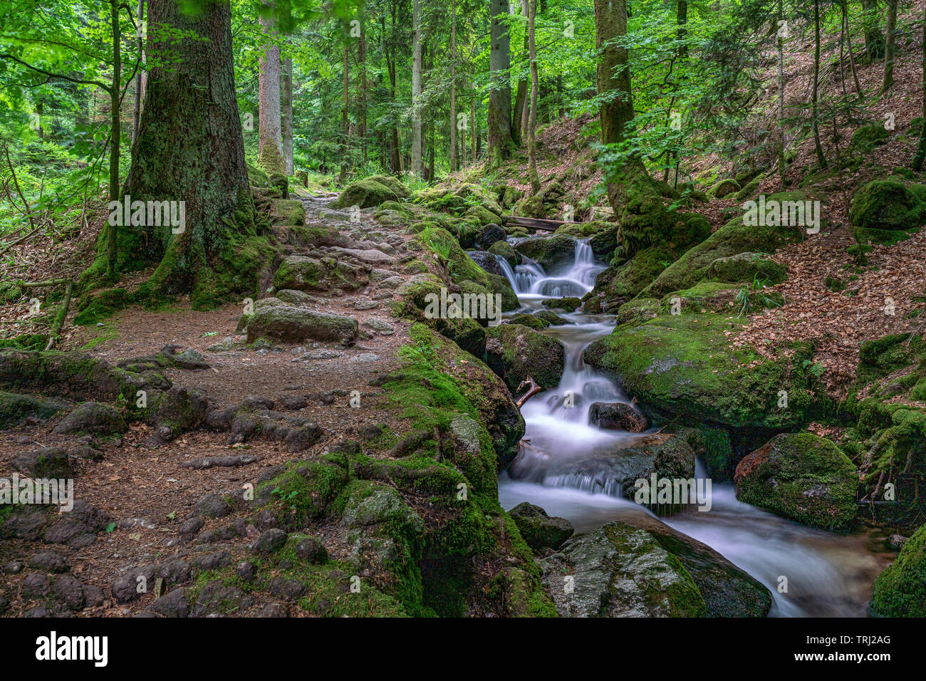 Wild romantic hiking trail along famous Gertelbach waterfalls, Black Forest, Germany - Stock Image