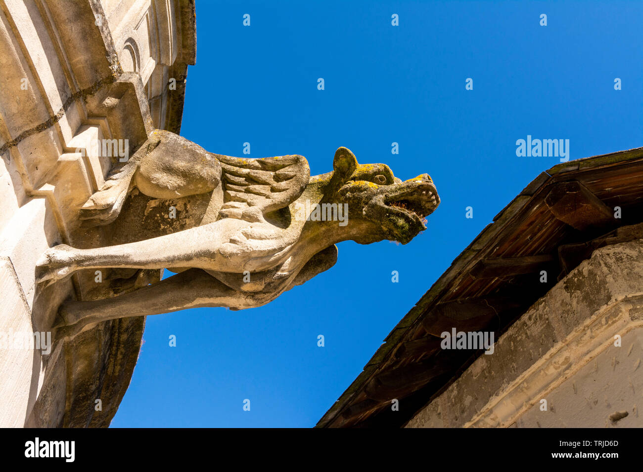 Gargoyle of Cloister of la Psalette near the Saint Gatien´s Cathedral  of Tours city, Indre et Loire, Centre Val de Loire, France - Stock Image