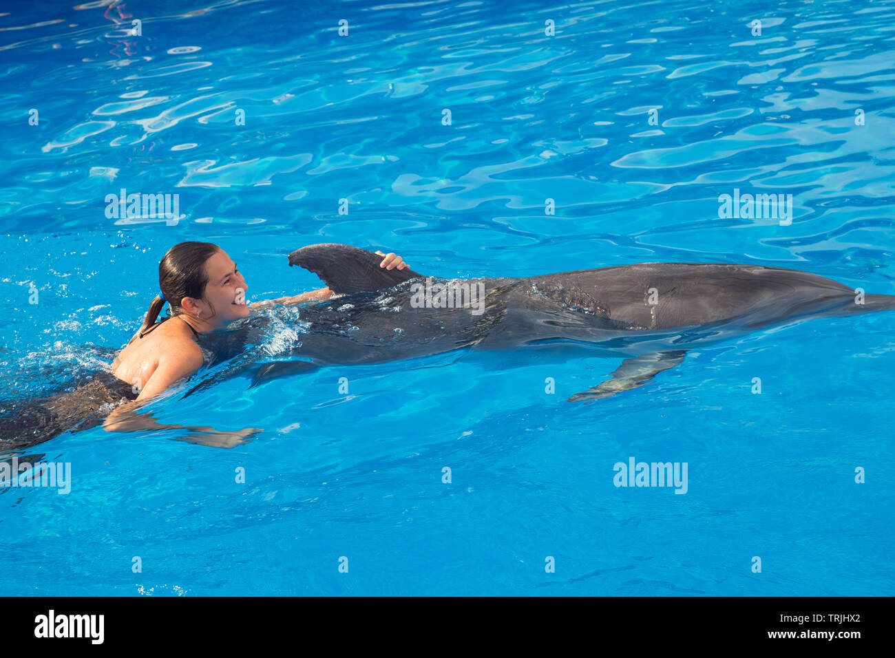Happy beautiful young girl laughs and swims with dolphins in blue swimming pool on sunny day Stock Photo