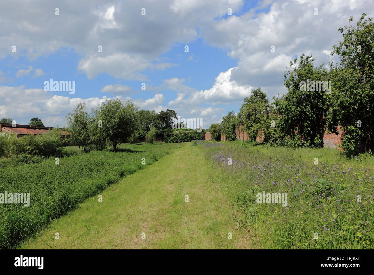 Fruit trees and flower meadows to attract wildlife in a walled garden in summertime - Stock Image