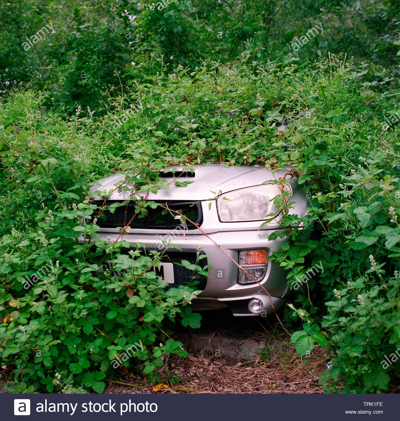 An abandoned Toyota car hidden in thick undergrowth. Gloucestershire, UK. - Stock Image