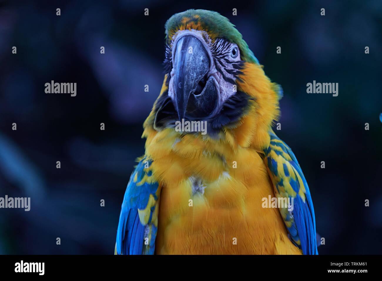 vogel blau gelb