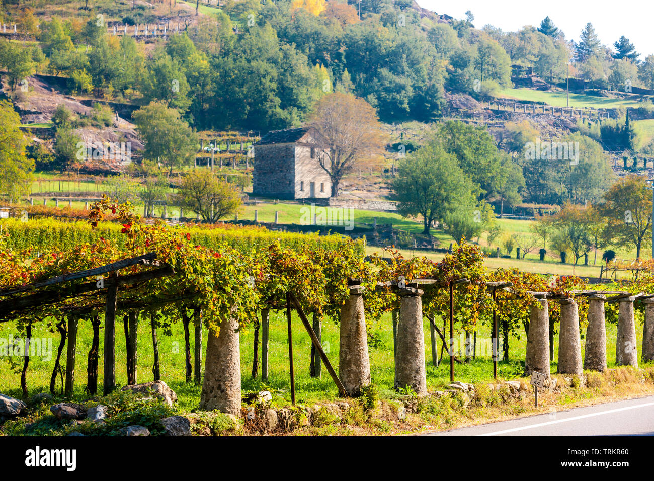 vineyard, Valle d'aosta, Italy - Stock Image