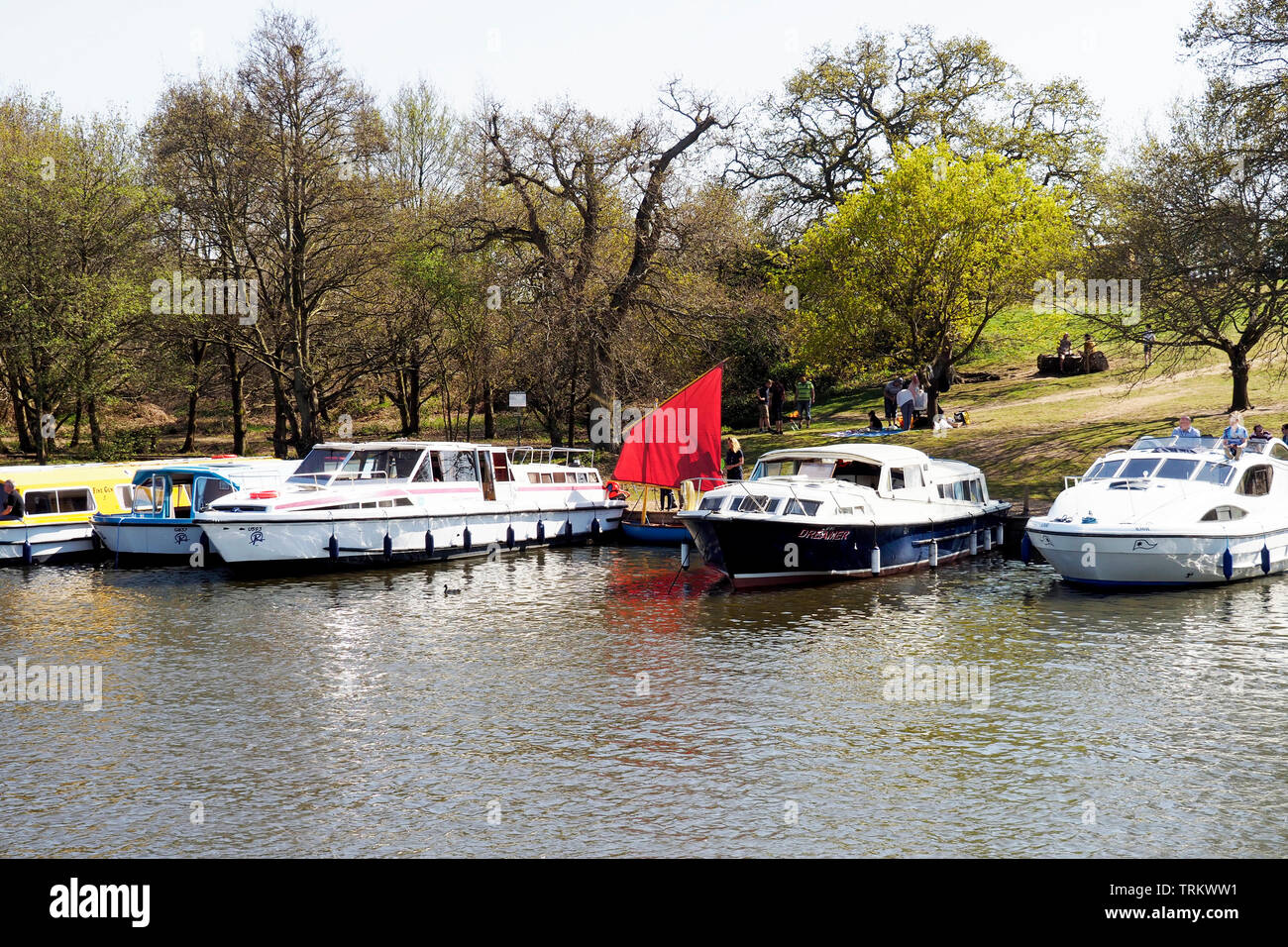 Large motor cruisers moored at Salhouse Broad, with the birght red sail of a small dinghy between them. - Stock Image