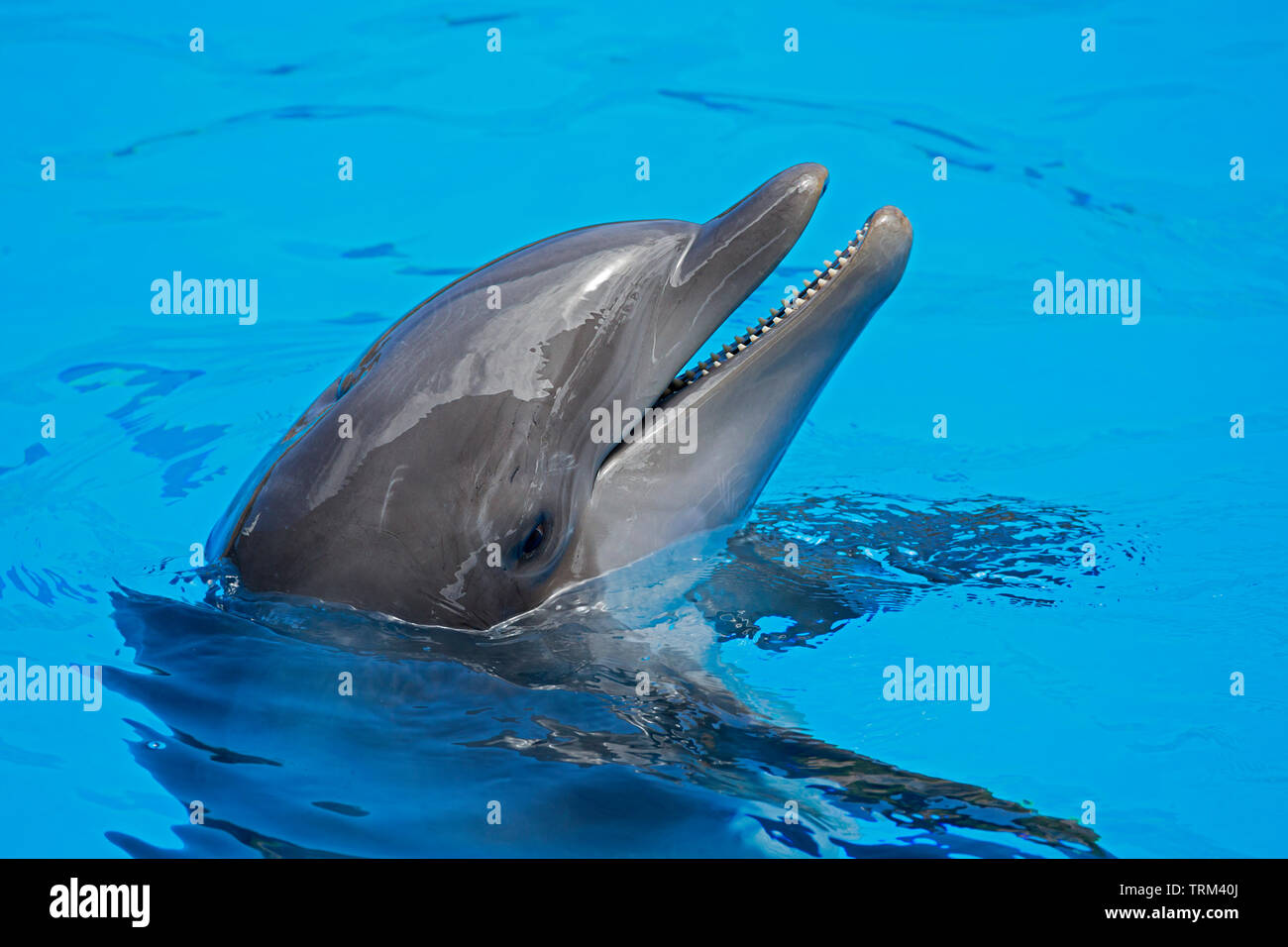 David Fleetham Bottlenose Dolphin Stock Photos & David Fleetham