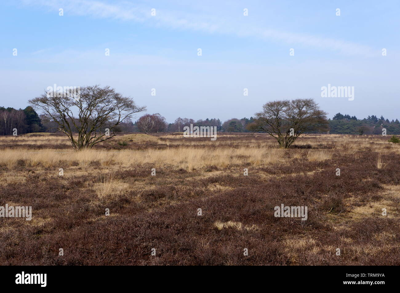 Nature reserve area called Het Gooi near Hilversum in the Netherlands. Stock Photo