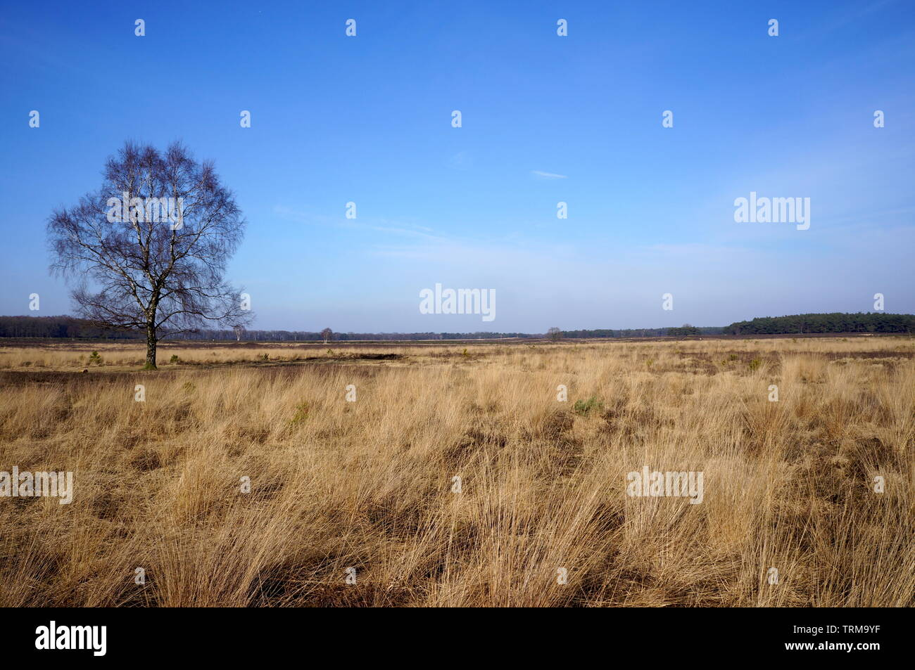 Nature reserve area called Het Gooi near Hilversum in the Netherlands. - Stock Image
