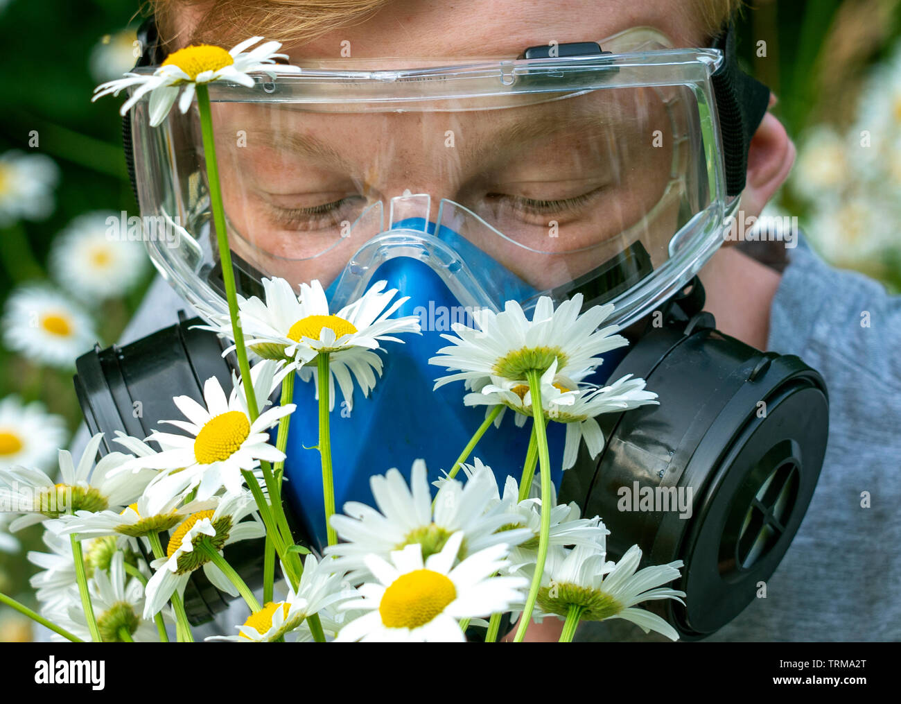a person with allergies in a respirator and goggles sniffs chamomile in a meadow. - Stock Image