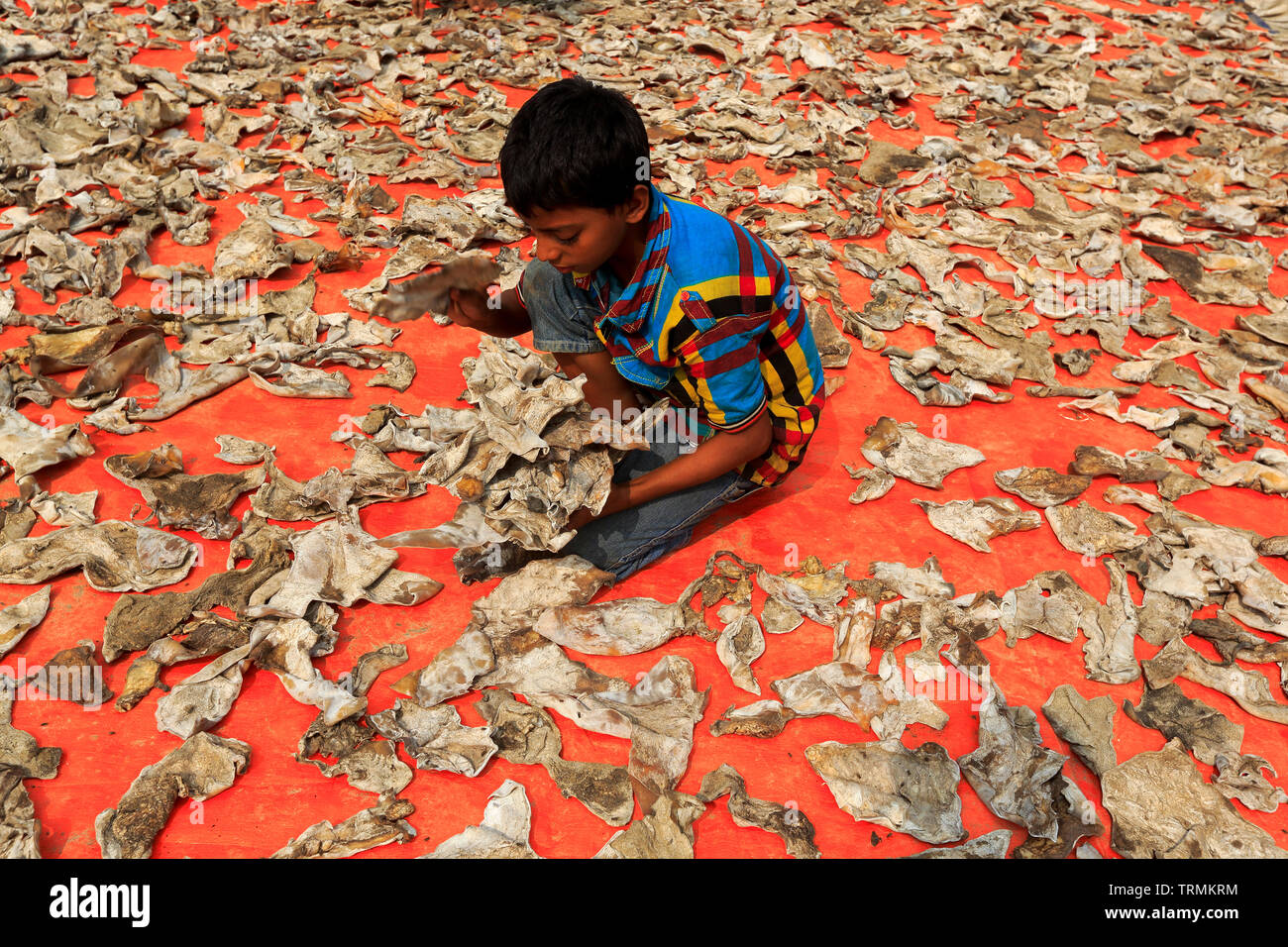 A child lying animal skins to dry at the bank of Buriganga River at Hazaribag. Dhaka, Bangladesh. - Stock Image